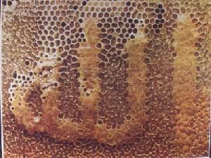 أحاديث نبوية عن العسل وفوائده